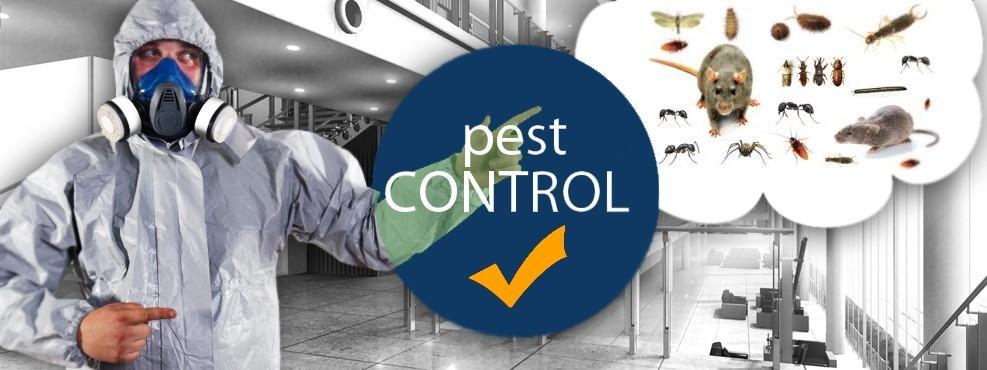 PEST-KONTROL-2