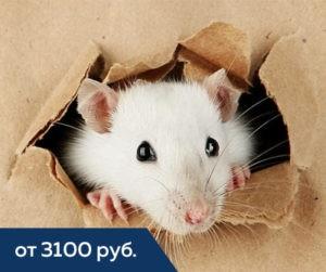 мышь прогрызла коробку